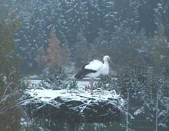 Der Winterstorch